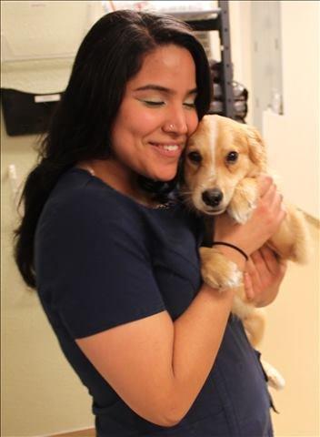 Lakeside Animal Clinic staff - Houston, TX