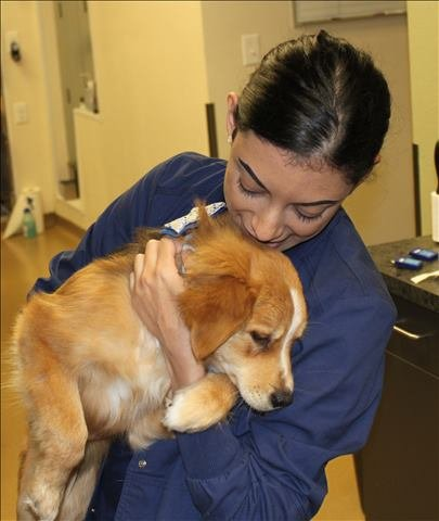 dog behavioral counseling in Houston, TX
