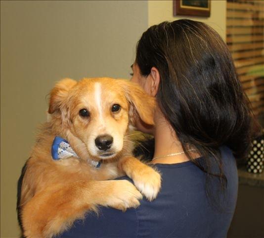 Lakeside Animal Clinic staff