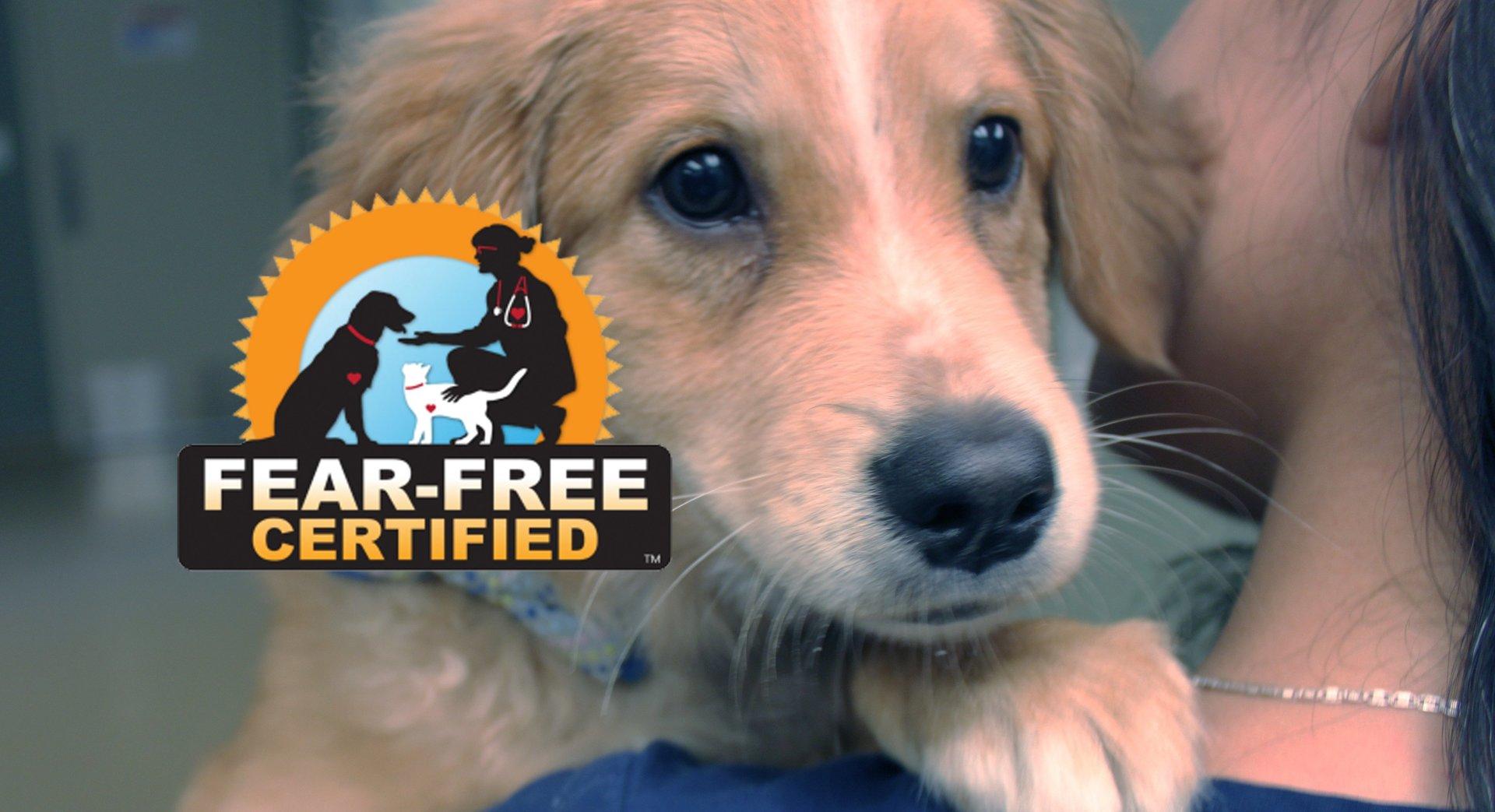 Fear-Free Certified