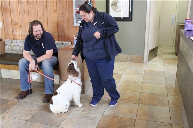 dog behavioral counselor - Houston, TX