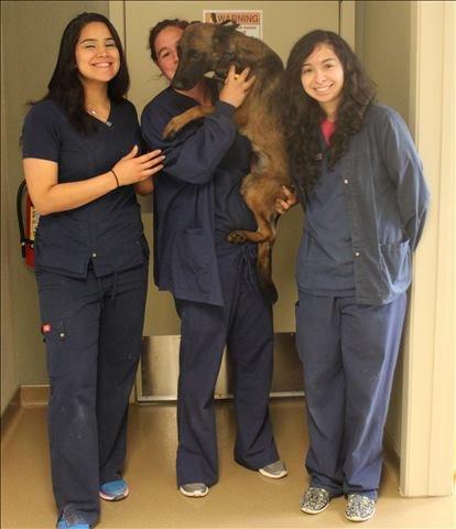 Lakeside Animal Clinic veterinary technicians