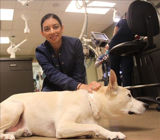 veterinary exams - Houston, TX
