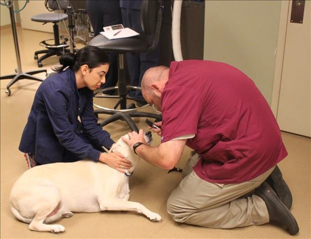 veterinary dentist in Houston, TX