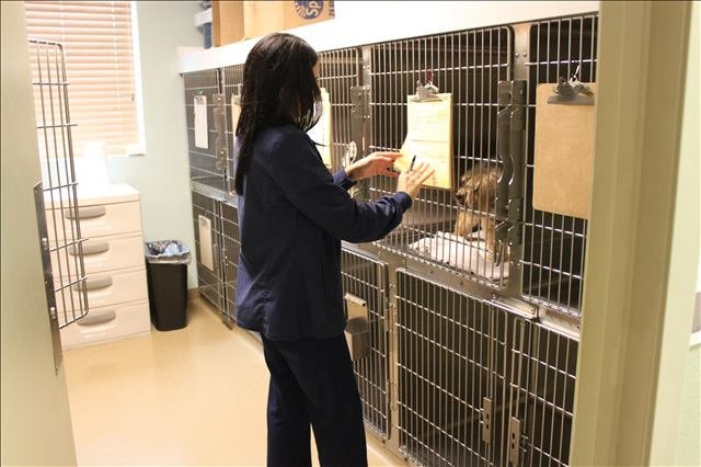 pet boarding at Lakeside Animal Clinic in Houston,  TX