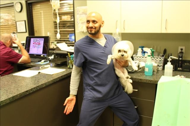 a dog that was just spayed at Lakeside Animal Clinic