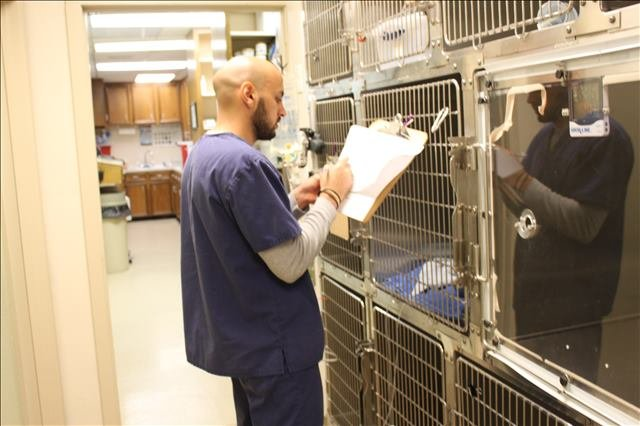 dogs being boarded at Lakeside Animal Clinic