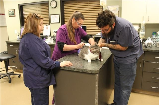 a cat being examined at Lakeside Animal Clinic