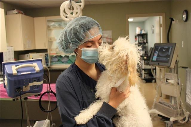a Lakeside Animal Clinic veterinary technician with a dog