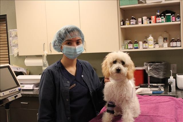 a dog with a cast on its arm at Lakeside Animal Clinic in Houston