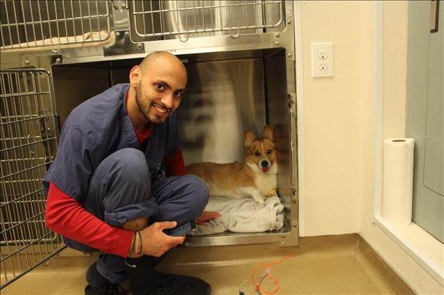 the dog boarding facility at Lakeside Animal Clinic
