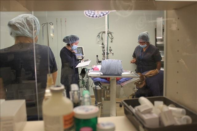 surgery at Lakeside Animal Clinic in Houston, TX