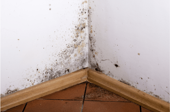 Mold Outbreak In A Home Restoration 1 Of Central Maryland