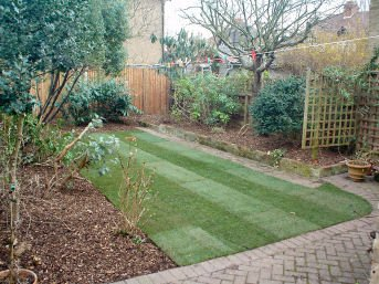 Hedge trimming - Woking - Roots & Shoots - Overgrown garden pruned, mulched, and turfed