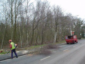 Tree pruning - London - Roots & Shoots - Felling decayed trees while the road was closed