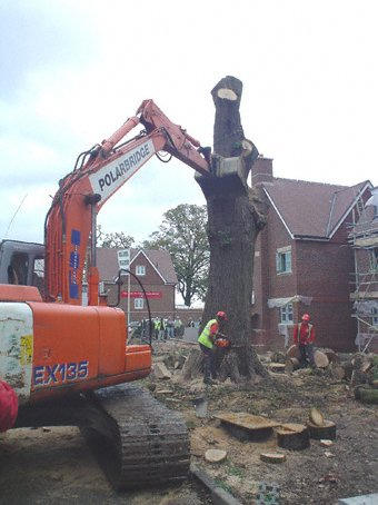 Tree felling - Slough - Roots & Shoots - Felling an oak in Wokingham