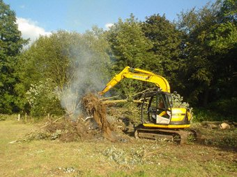 Branch thinning - Kingston - Roots & Shoots - Burn on site or take it all away... the choice is yours