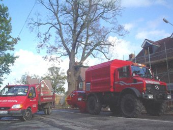 Stump grinding - Bristol - Roots & Shoots - Dead oak tree in Wokingham