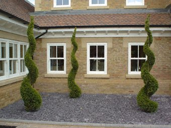 Landscape gardening - Godalming - Roots & Shoots - Cypress Spirals in blue slate mulch