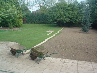 Landscape gardening - Godalming - Roots & Shoots - Blue Atlantic Cedar and some new turf for this customer