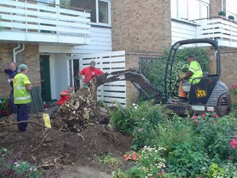 Landscape gardening - Godalming - Roots & Shoots - Clearing the garden