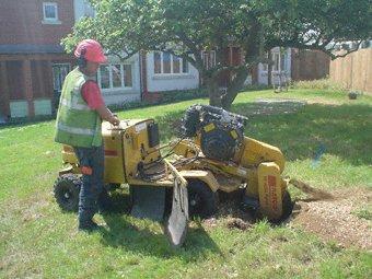 Stump grinding - Swindon - Roots & Shoots - Tree stumping