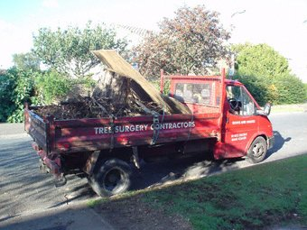 Landscape gardening - Woking - Roots & Shoots - Tree surgery contractors