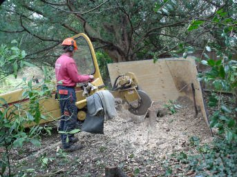 Tree pruning - London - Roots & Shoots - Stump grinding