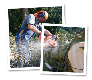 Tree felling - Slough - Roots & Shoots - Tree cutting