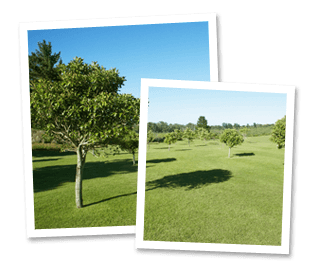 Landscape gardening - Godalming - Roots & Shoots - landscape