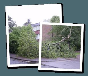 Tree felling - London - Roots & Shoots - fallen trunk