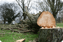 Tree felling - Slough - Roots & Shoots - Tree stumping