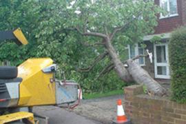Tree felling - Slough - Roots & Shoots - fallen tree