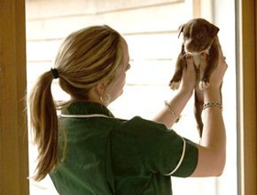 General examinations - York, North Yorkshire - Wagtails Veterinary Centre - Pet Care
