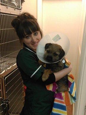 Domestic pet treatment - Knaresborough, North Yorkshire - Wagtails Veterinary Centre - Cat