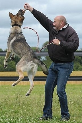 dog and master running