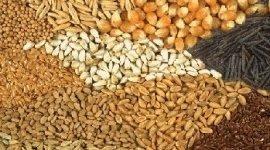 vendita semi di grano turco, semi di farro, semi di girasole