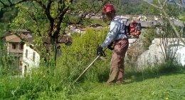 taglio erba, tosaerba, giardinaggio