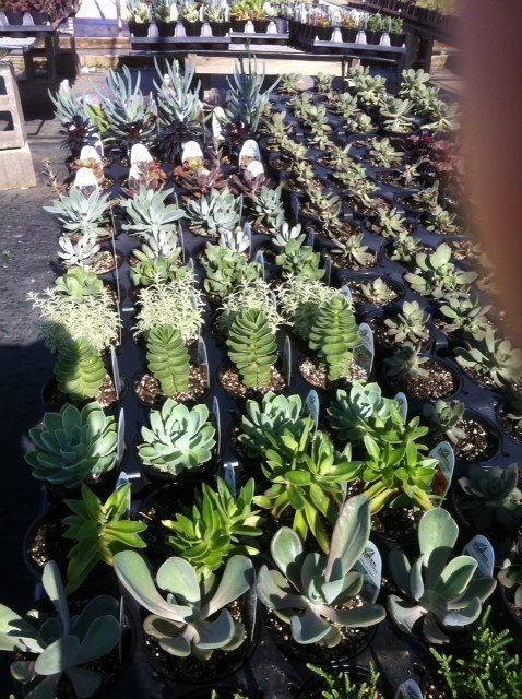 Farm Fresh Succulents