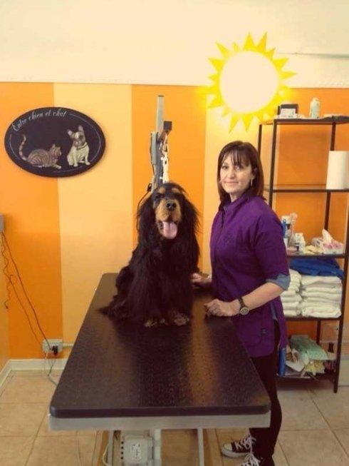 un cane con pelo lungo seduto su un banco per la toelettatura e accanto una donna