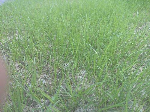 View of greener grass