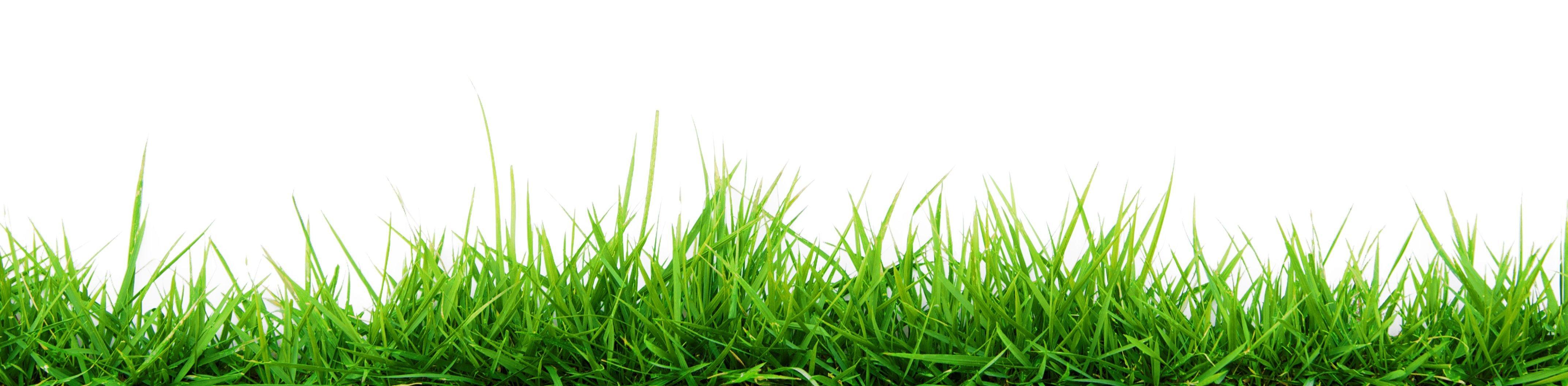 Canterbury lawns lawns canterbury nz for Grow landscapes christchurch