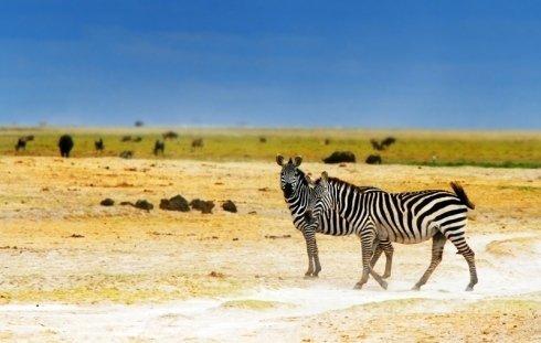 Viaggi organizzati in Africa