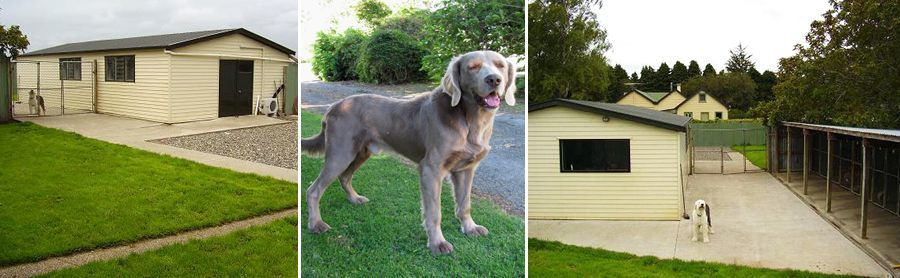 The relaxed, safe and secure dog kennels in Invercargill