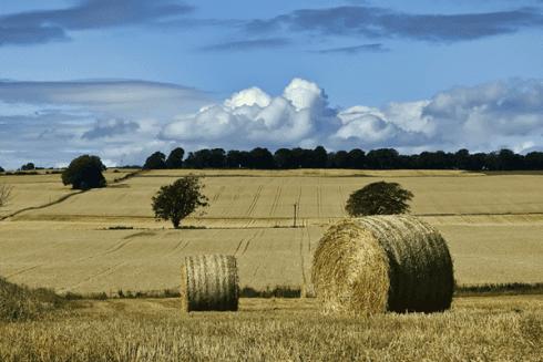 Terrini agricoli in vendita o locazione.