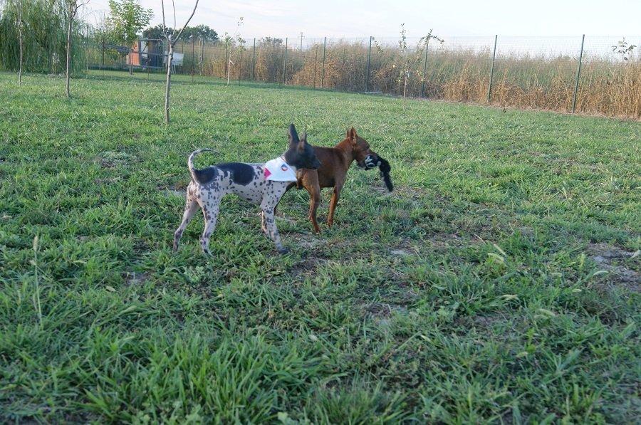 Area verde dedicata e sorveglianza per cani a Badia Pavese