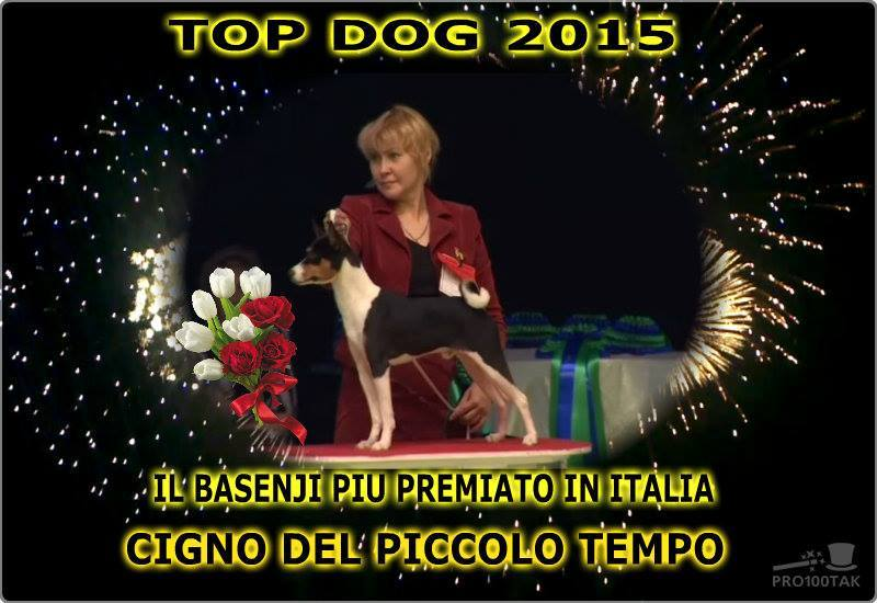 Cane Basenji Cigno del piccolo tempo TOP DOG a Badia Pavese