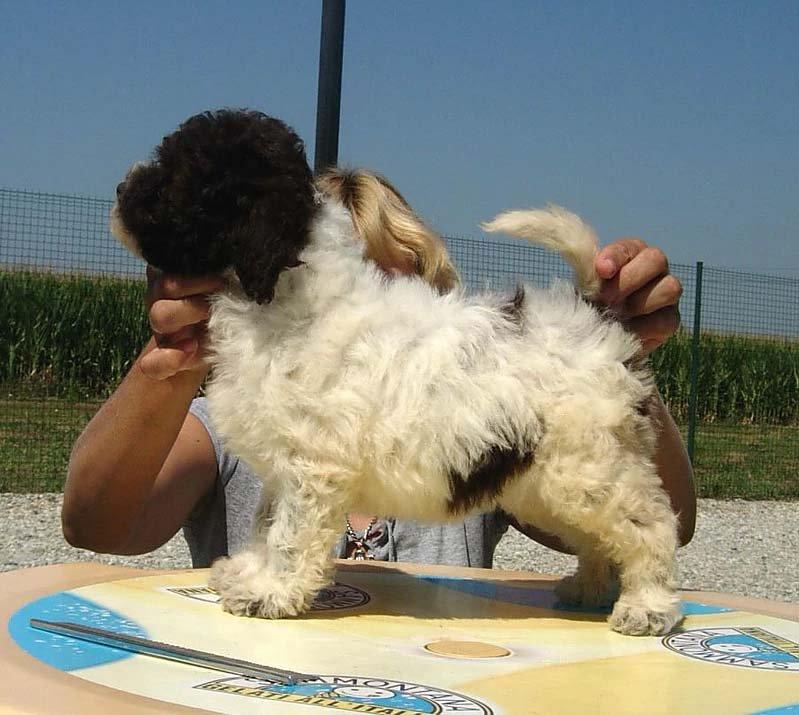 Allevamento cuccioli di razza a badia pavese