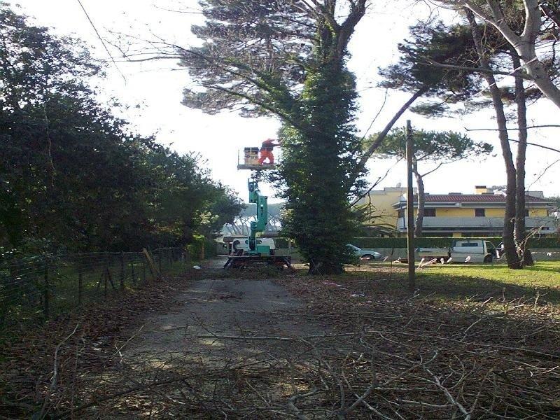 lavori potatura alberi