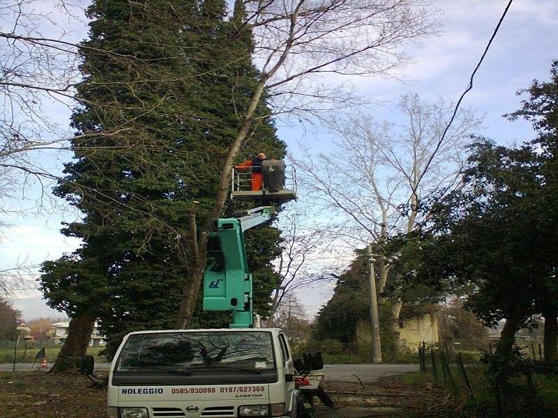 giardinaggio e potatura alberi